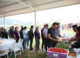 Piknik İkramları İstanbul Piknik Organizasyonu